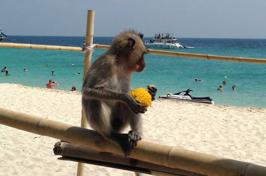 タイのリン島にいた猿