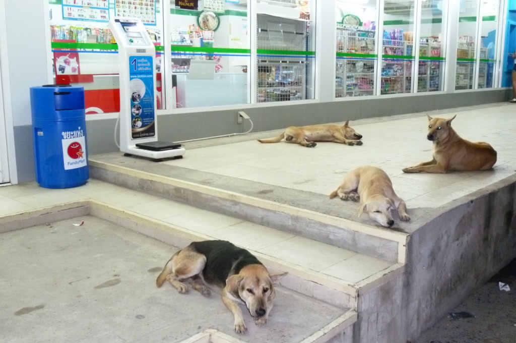 タイのファミマの前で寝ている犬