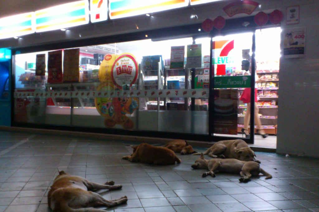 タイのセブンの前で寝ている犬
