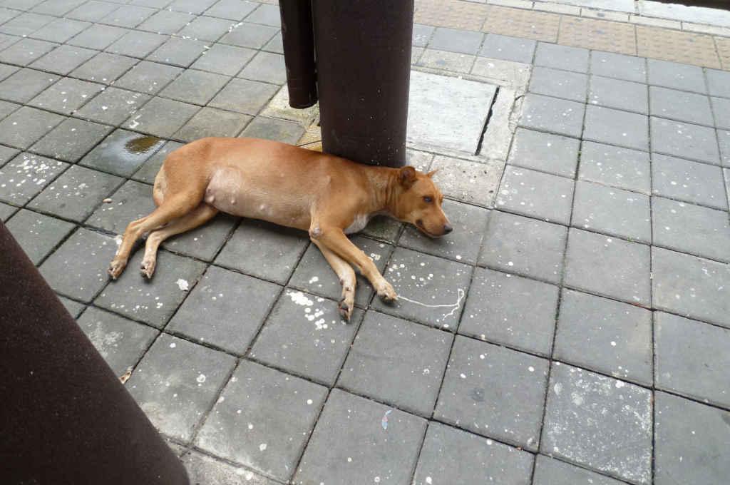 バンコクの駅で寝ている犬