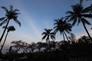 タイのビーチとヤシの木