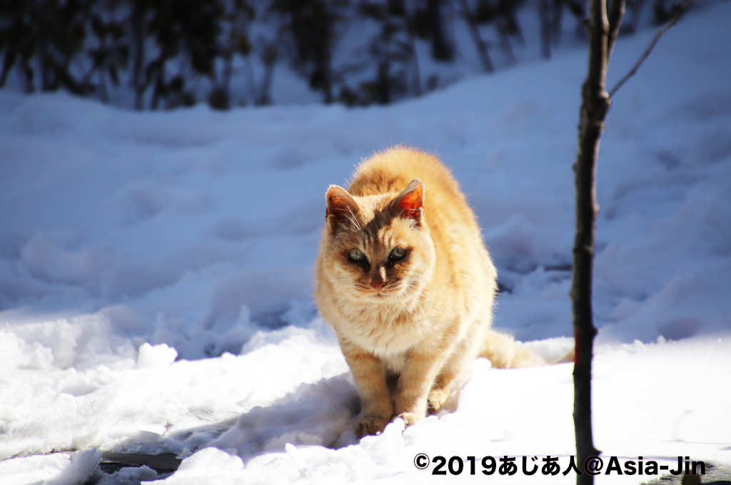 康定の南無寺で見た猫