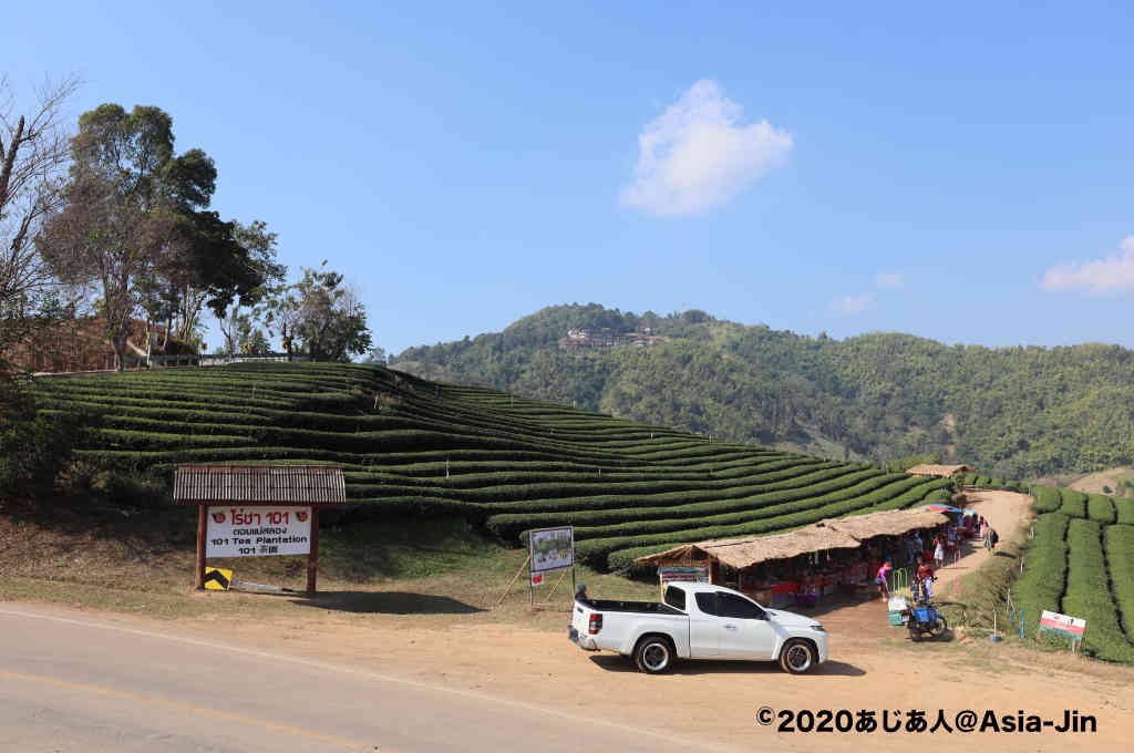 メーサロンの101号茶畑